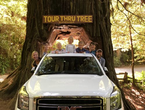 Redwoods Drive Through Tree