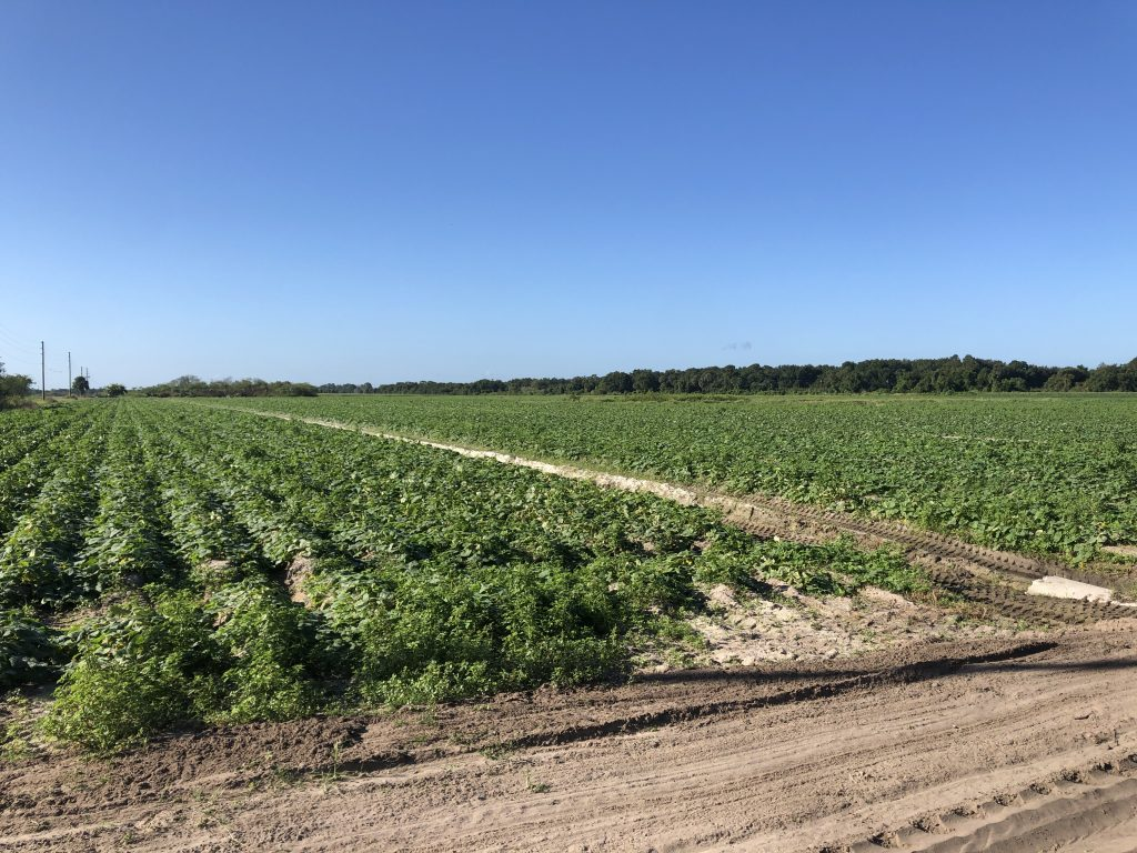 Farm Central Florida