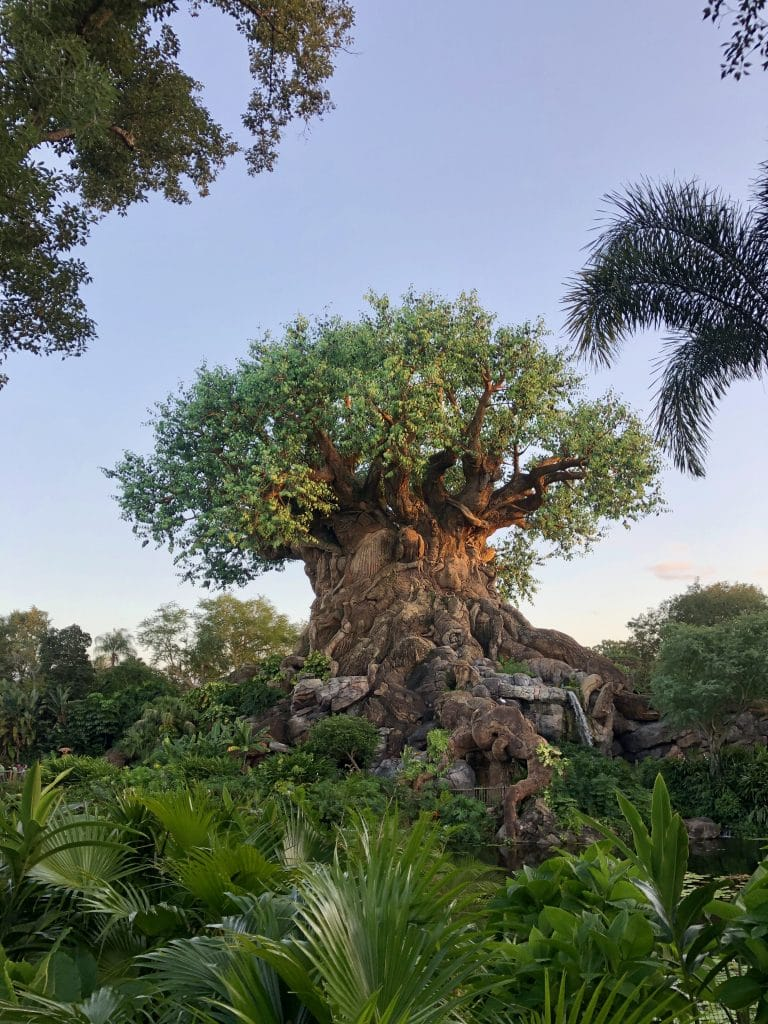 animal kingdom for first timers