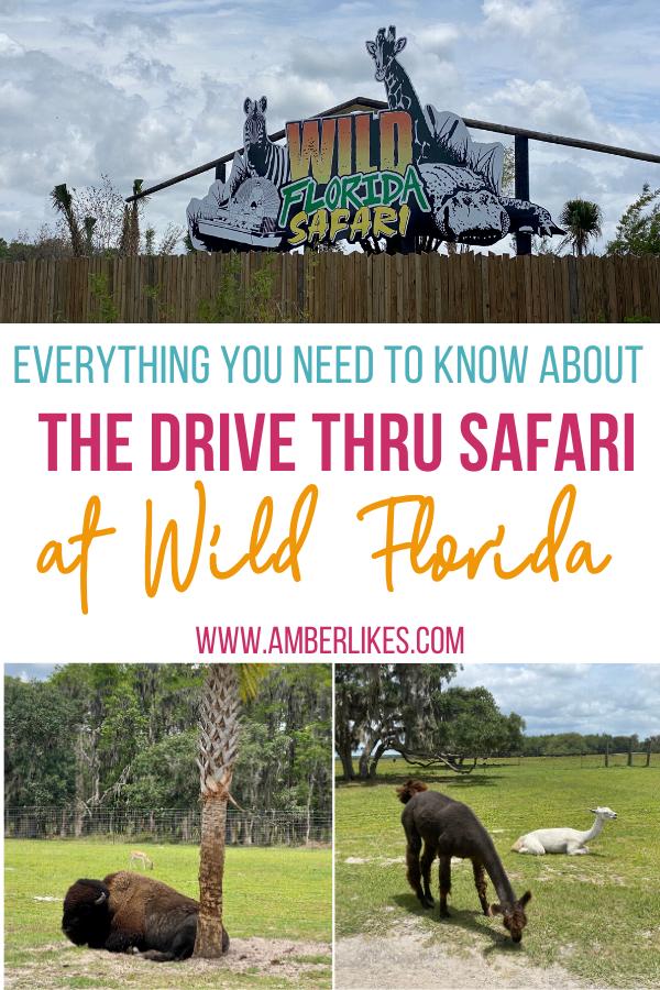 Wild Florida drive thru safari