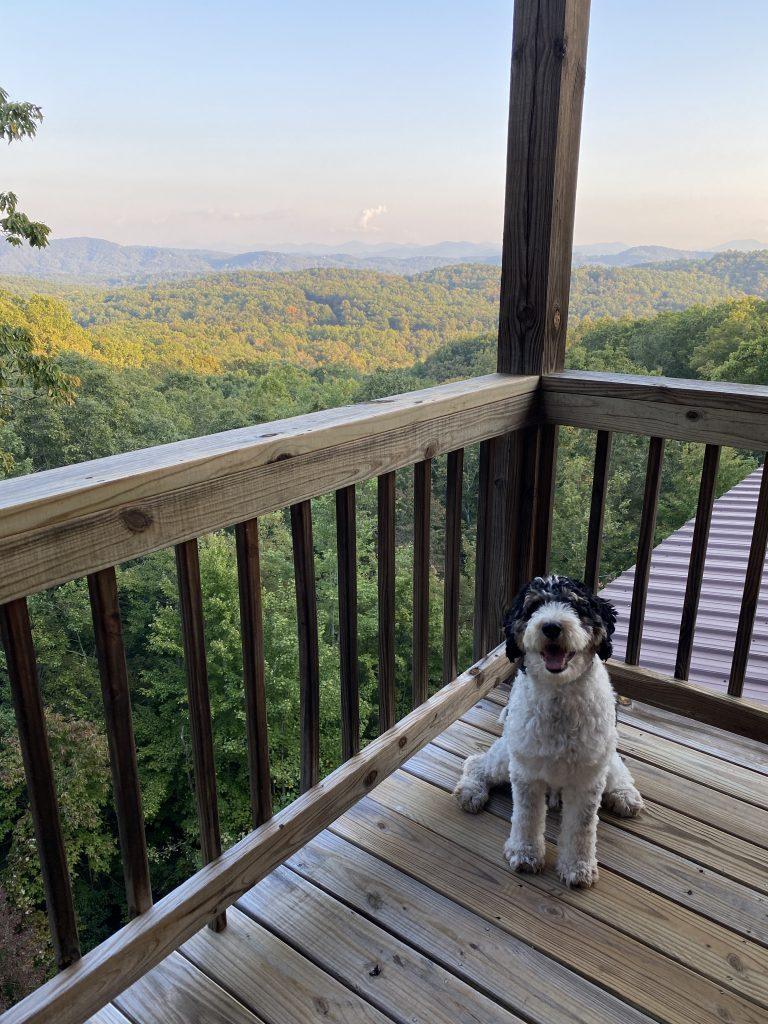 pet friendly north georgia cabins